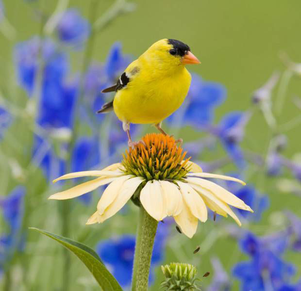Get into the garden: How to encourage birds into your outdoor space