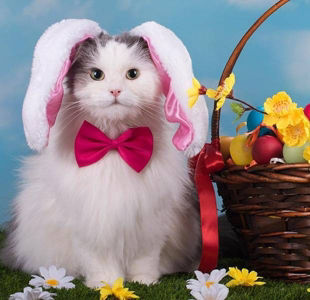 12 animals that are so ready for Easter