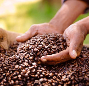 Why you should switch your morning coffee to a Fair Trade blend