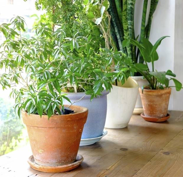 Care for your house plants like a pro